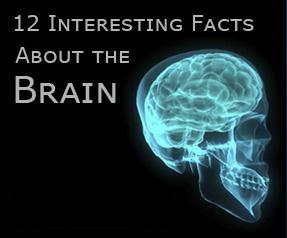 saikology - Brain Facts